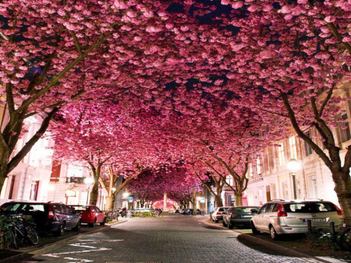 Top-10-Spring-Destinations-Bonn-740x555
