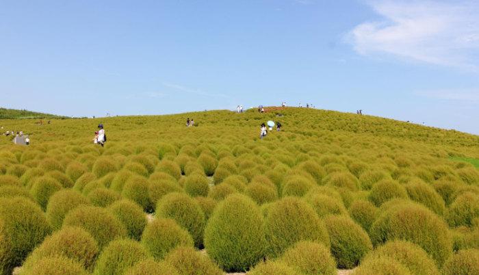 Top-10-Spring-Destinations-Hitachi-Photo-by-Tony-Pham-740x425