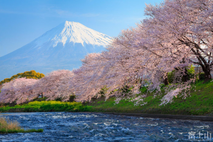 Top-10-Spring-Destinations-Japan-Photo-by-Jirat-Srisabye-740x493