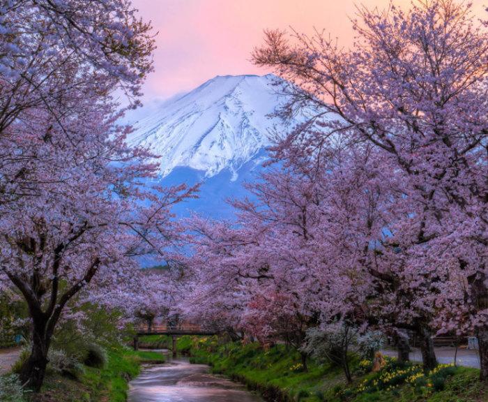 Top-10-Spring-Destinations-Japan-Photo-by-Natasha-Pnini-740x609