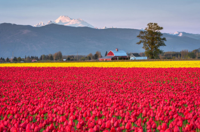 Top-10-Spring-Destinations-Mt-Baker-Photo-by-Ray-Green-740x491