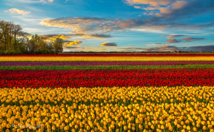 Top-10-Spring-Destinations-Netherlands-Photo-byTore-H-740x457