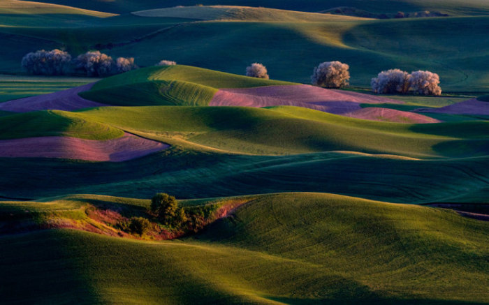 Top-10-Spring-Destinations-Washington-Photo-by-Randall-K-Roberts-740x462