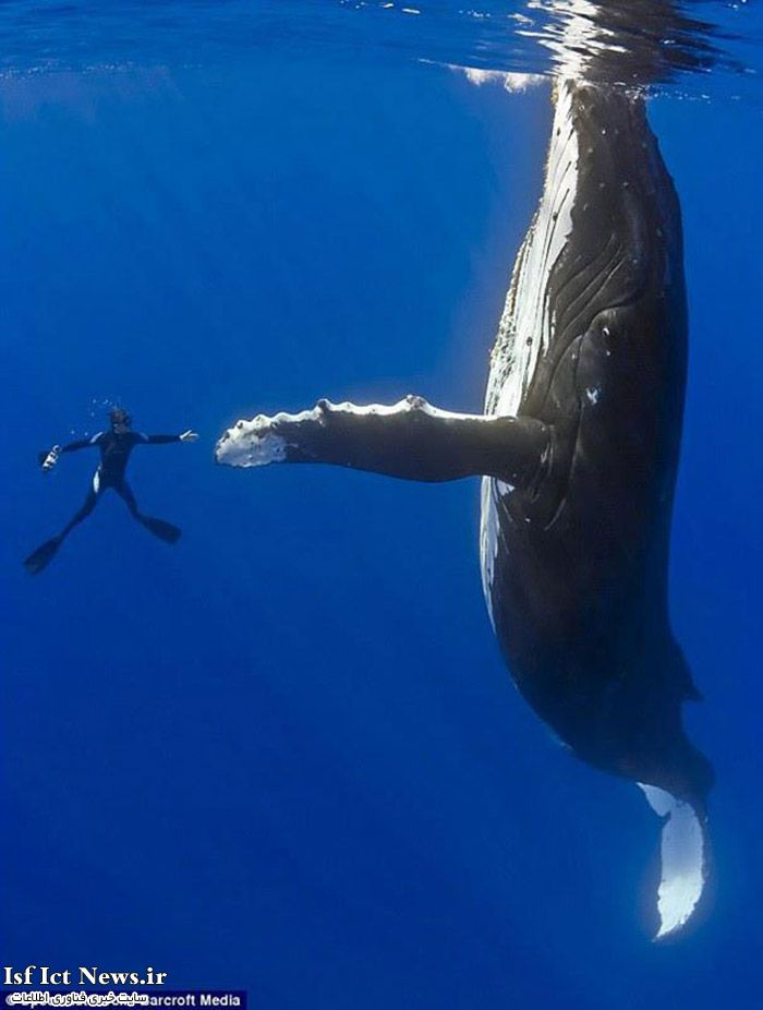 diver-whale-high-five-perfect-timing-(1)